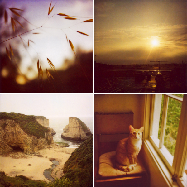 little things, travel, grand adventures and fur friends